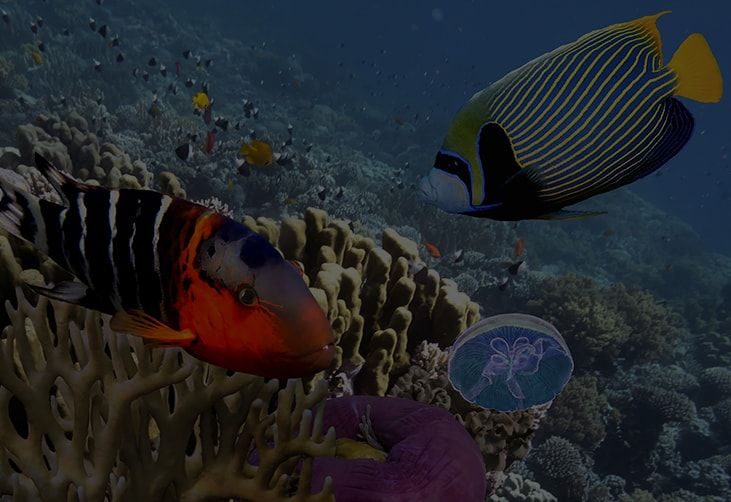 Aquarium services Riverside, ca - Treasures of the sea |