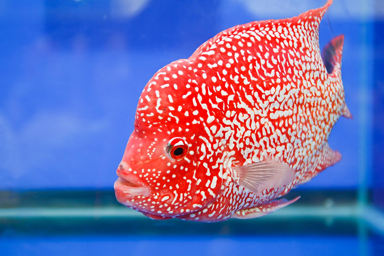 Vibrant freshwater fish |